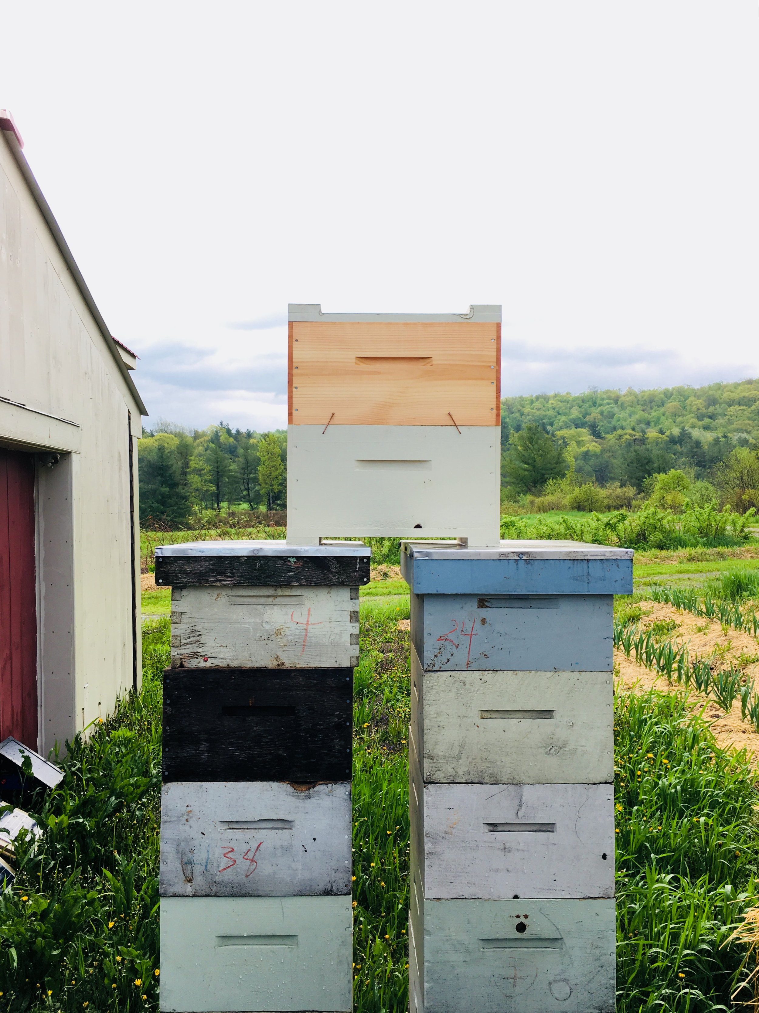 I love the color and hues of the bee boxes
