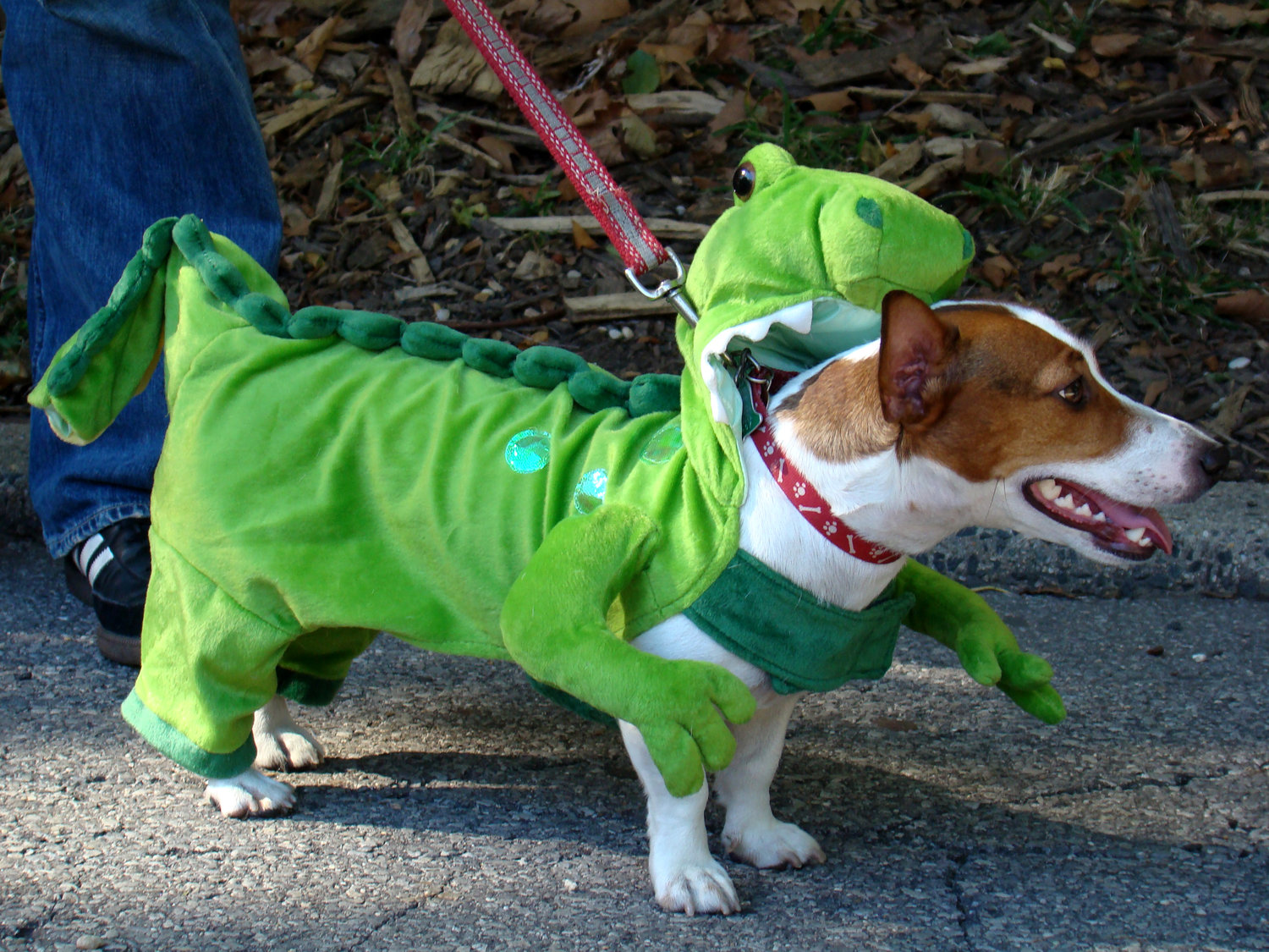 DOG+IN+COSTUME.jpg