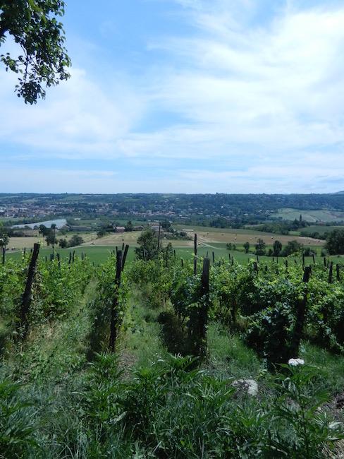 Vino Per Tutti - Andrea Cervini - Vino Del Poggio - Wijngaard - Vinyard 2