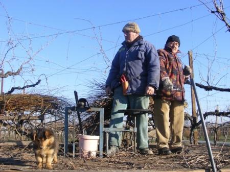 Azienda Agricola Gatti werk in de wijngaard