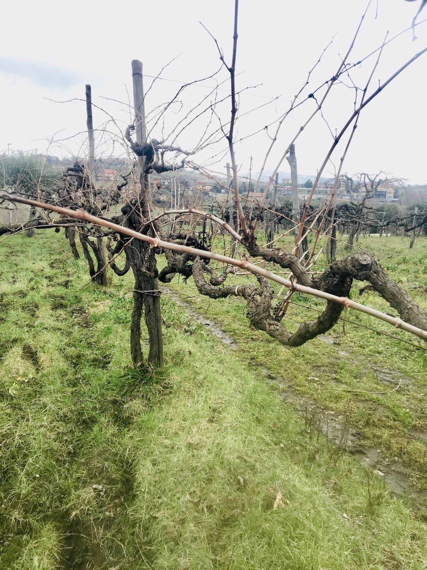 Wijngaard Cantina Giardino