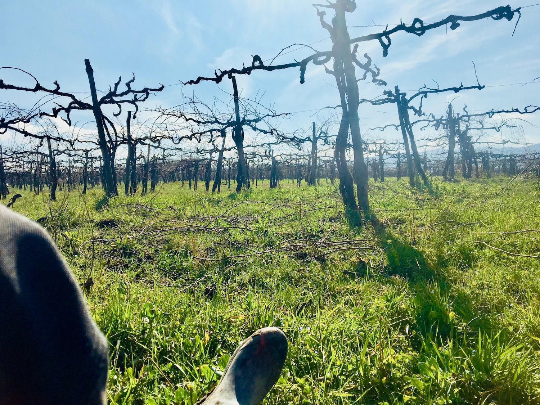 Rustmomentje in de wijngaard