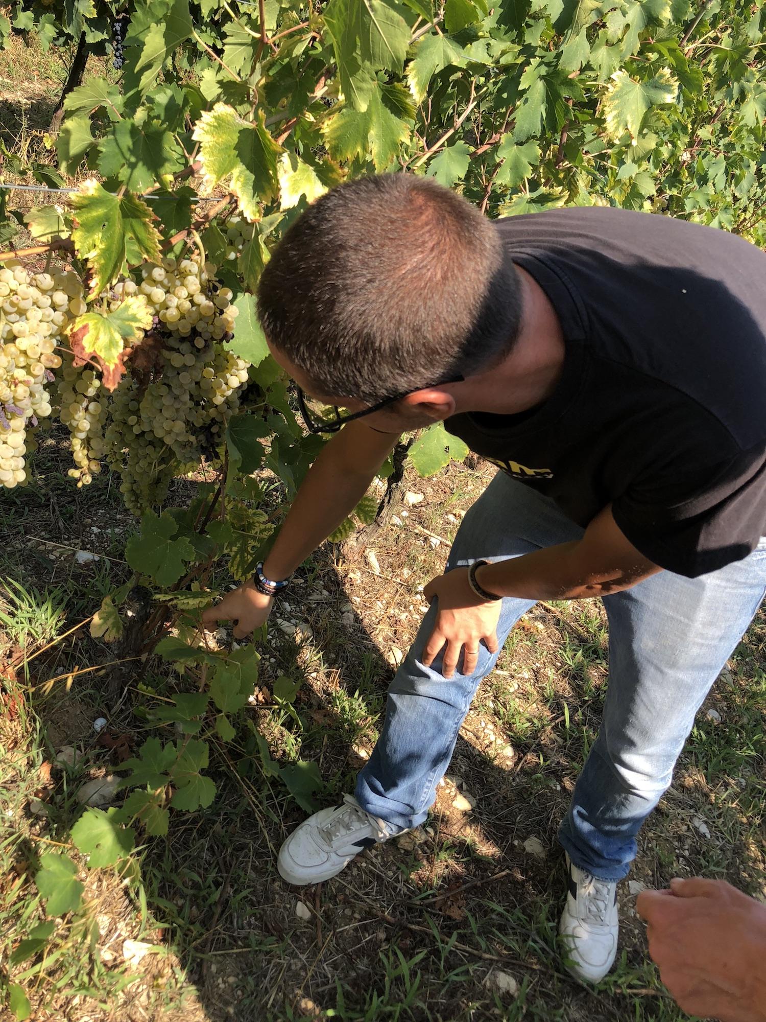 Vino Per Tutti - Raina Montefalco Francesco wijngaard.jpg
