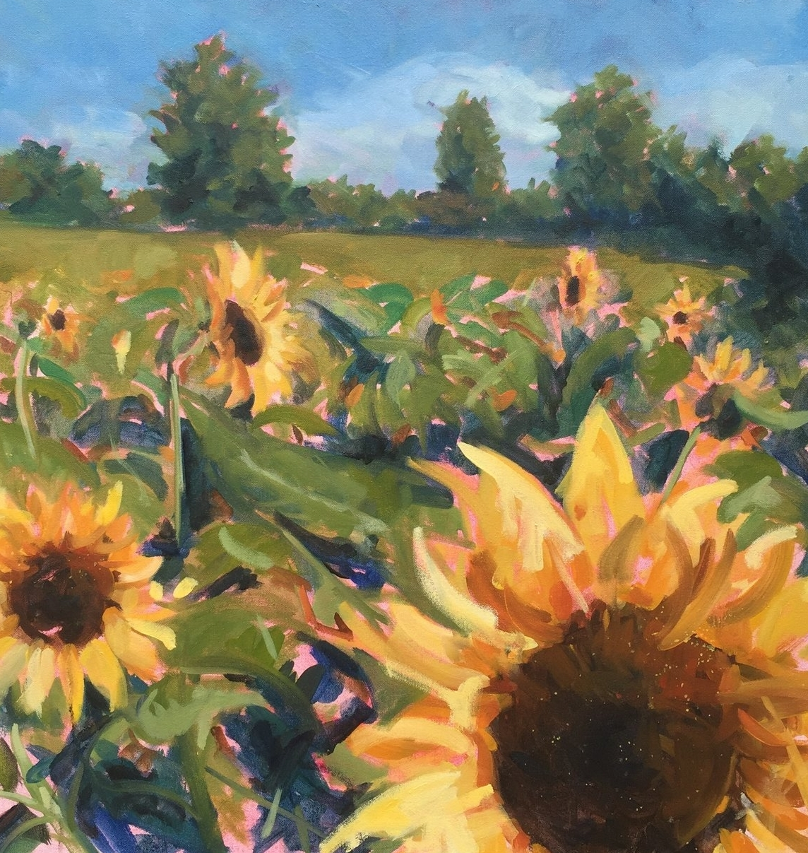 Bellair Sunflowers in Late August