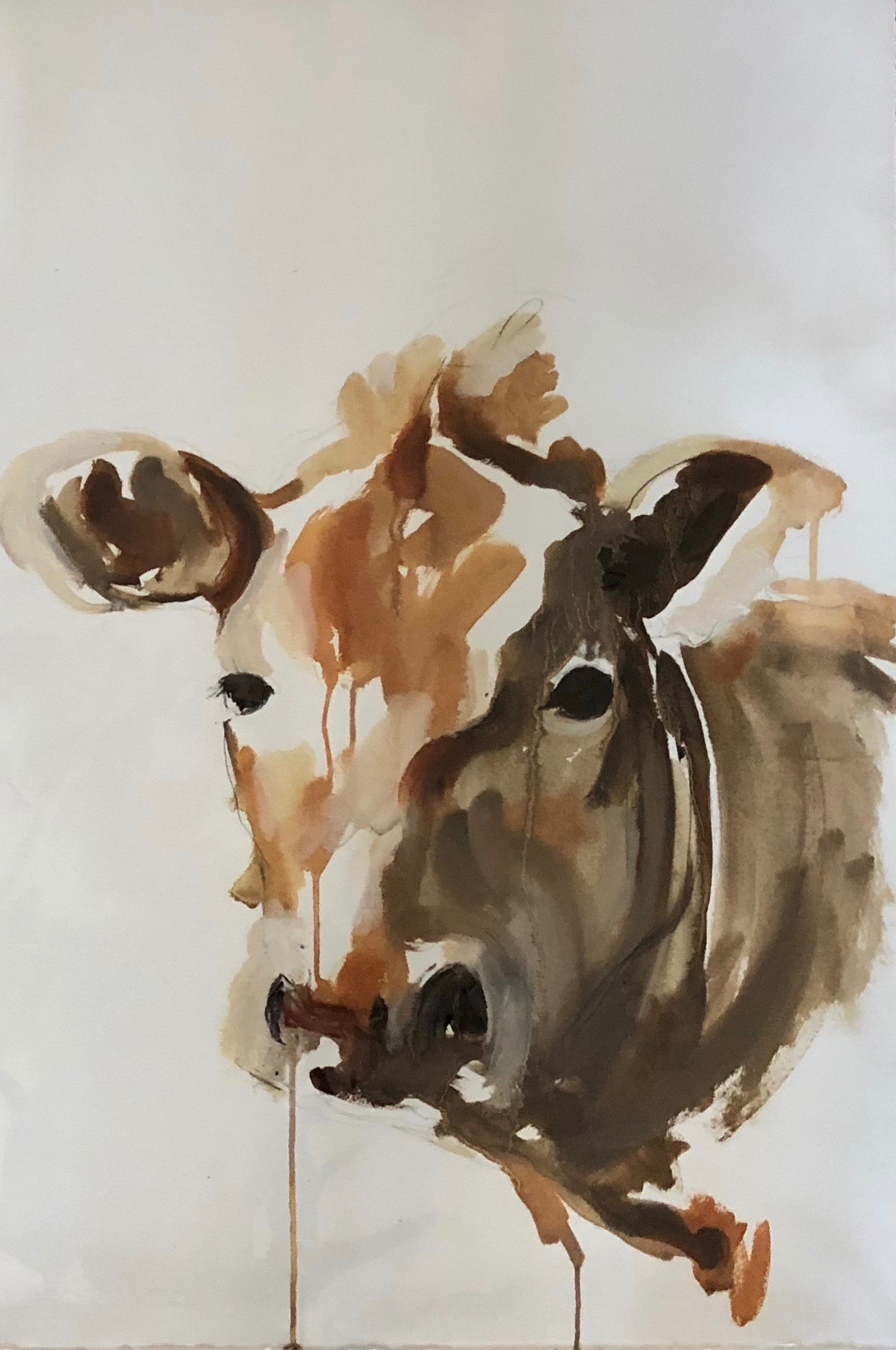 Cow Study III