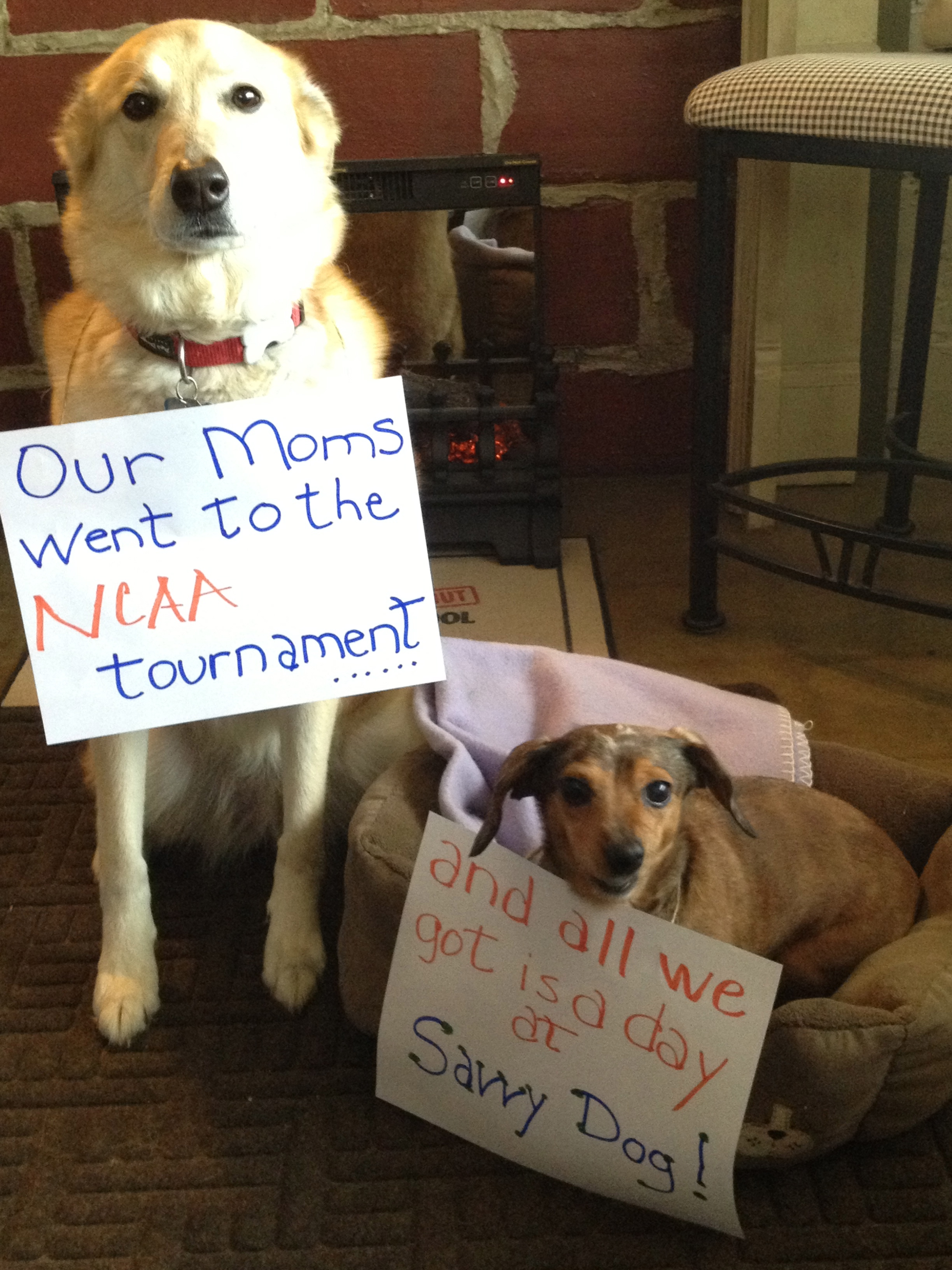 dog faming NCAA