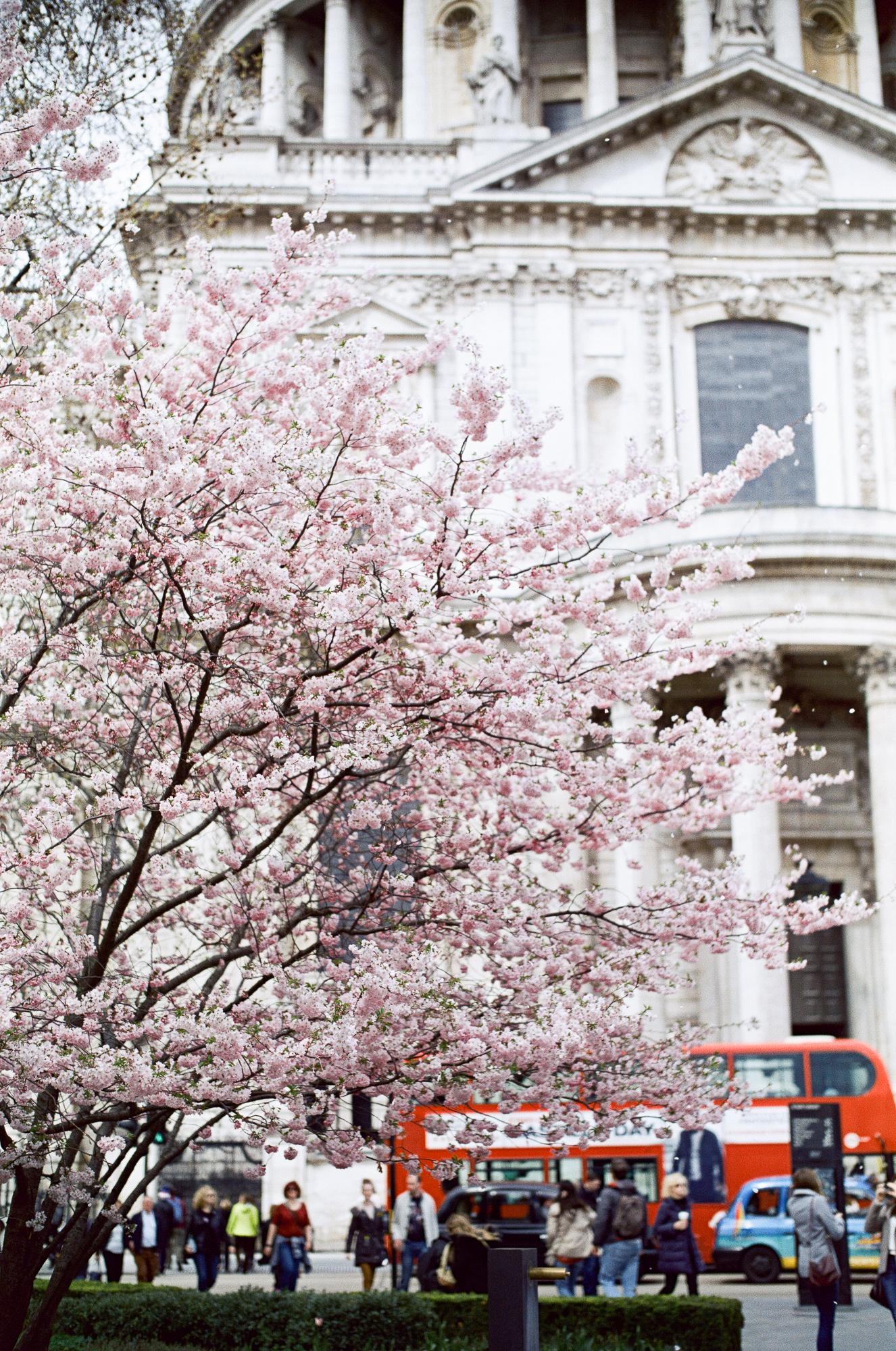 london-photographer-ksenia-zizina-flower-power-