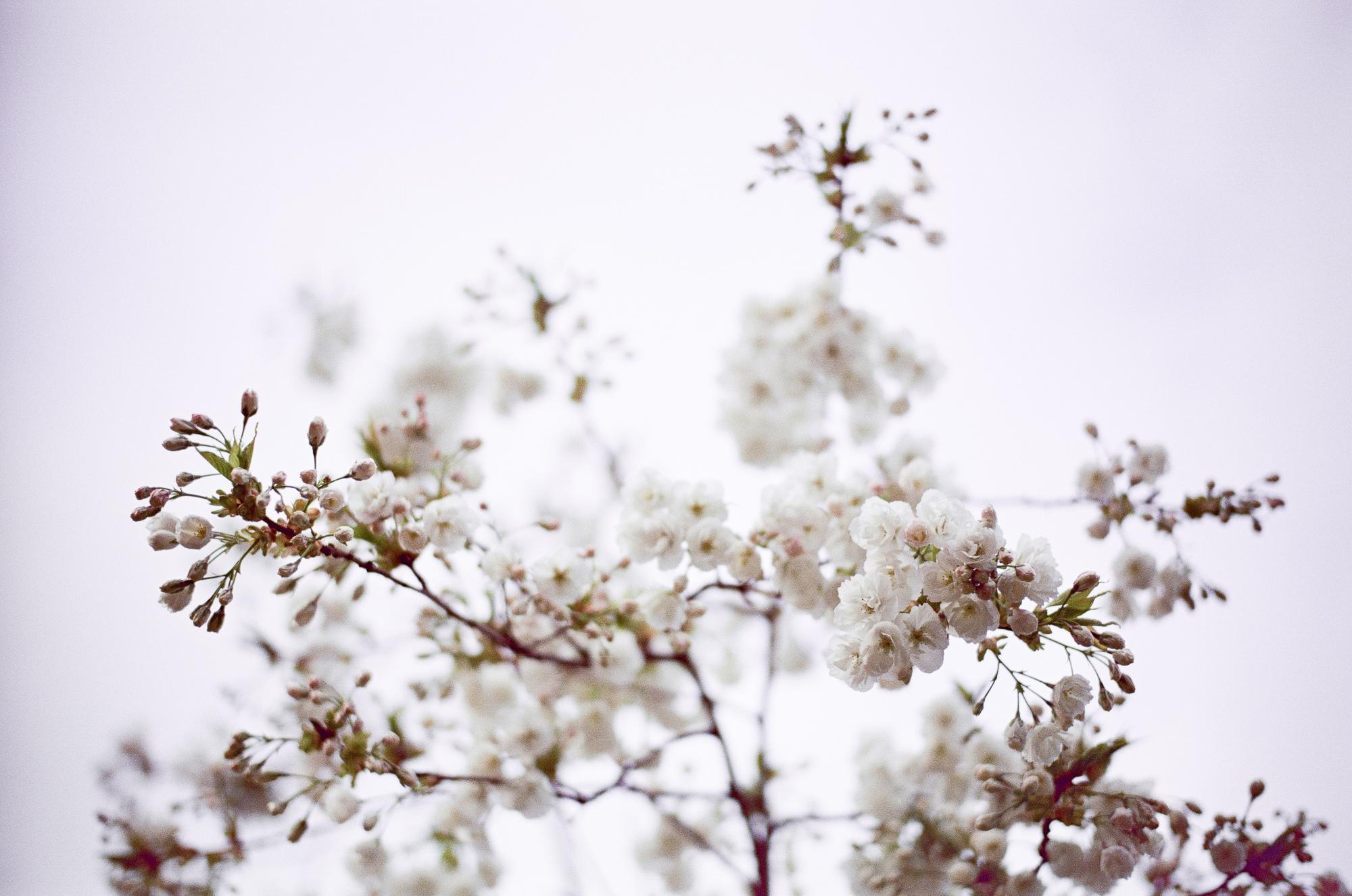 london-photographer-ksenia-zizina-flower-power-3
