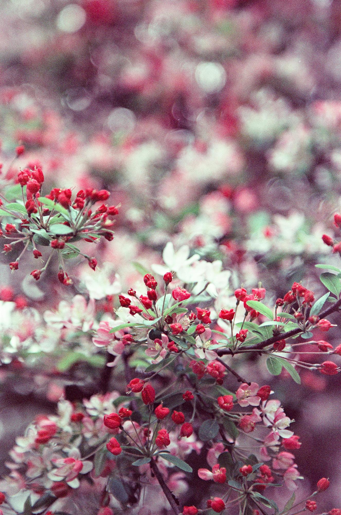 london-photographer-ksenia-zizina-flower-power-4