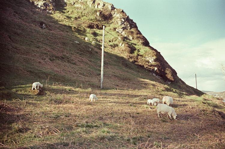 isle-of-kerrera-scotland-london-photographer-ksenia-zizina-3.jpg