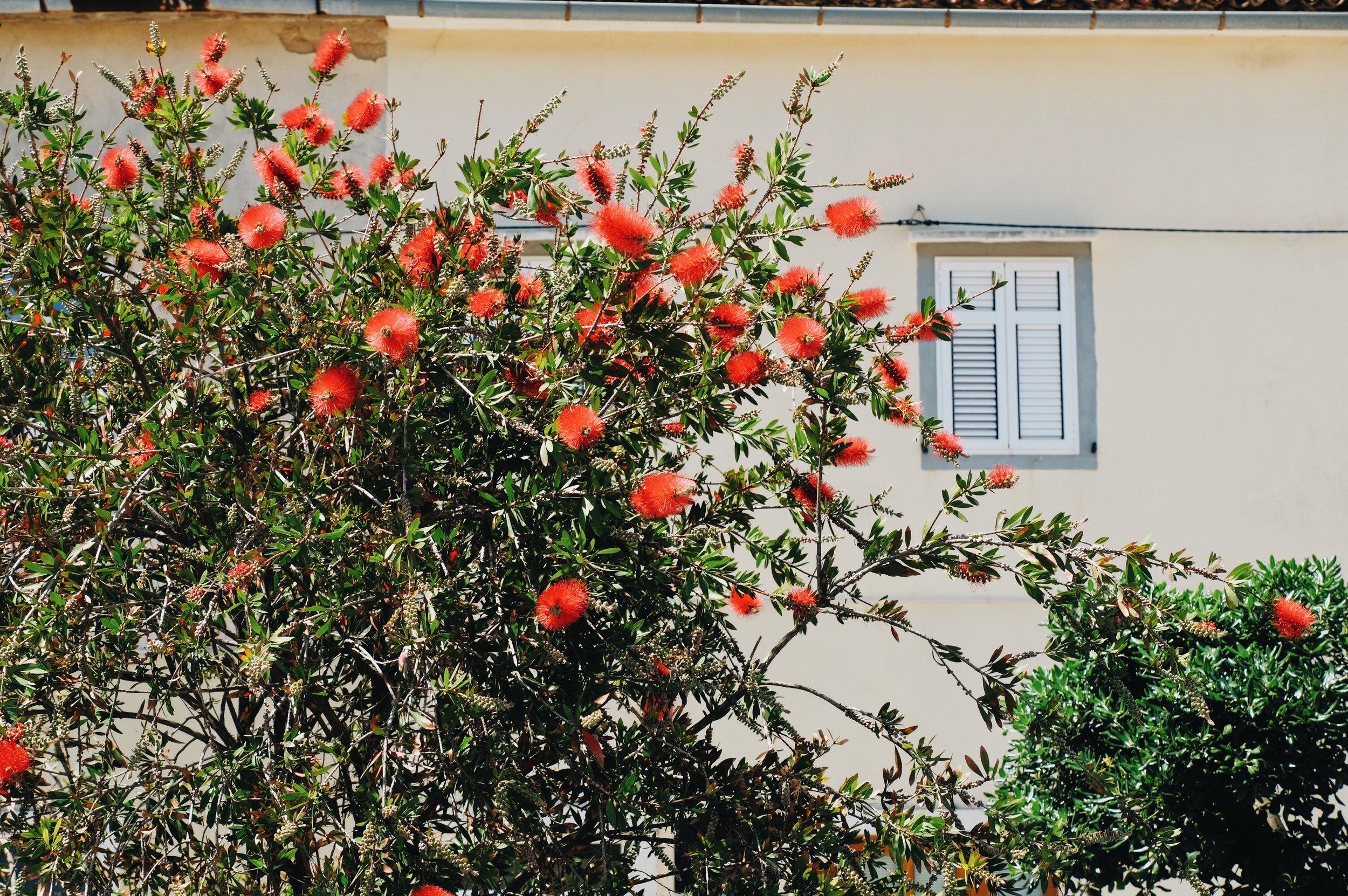 fat-creative-blog-2017-05-Unique-travel-destination- croatian-kvarner-region-cres-losinj-8.JPG