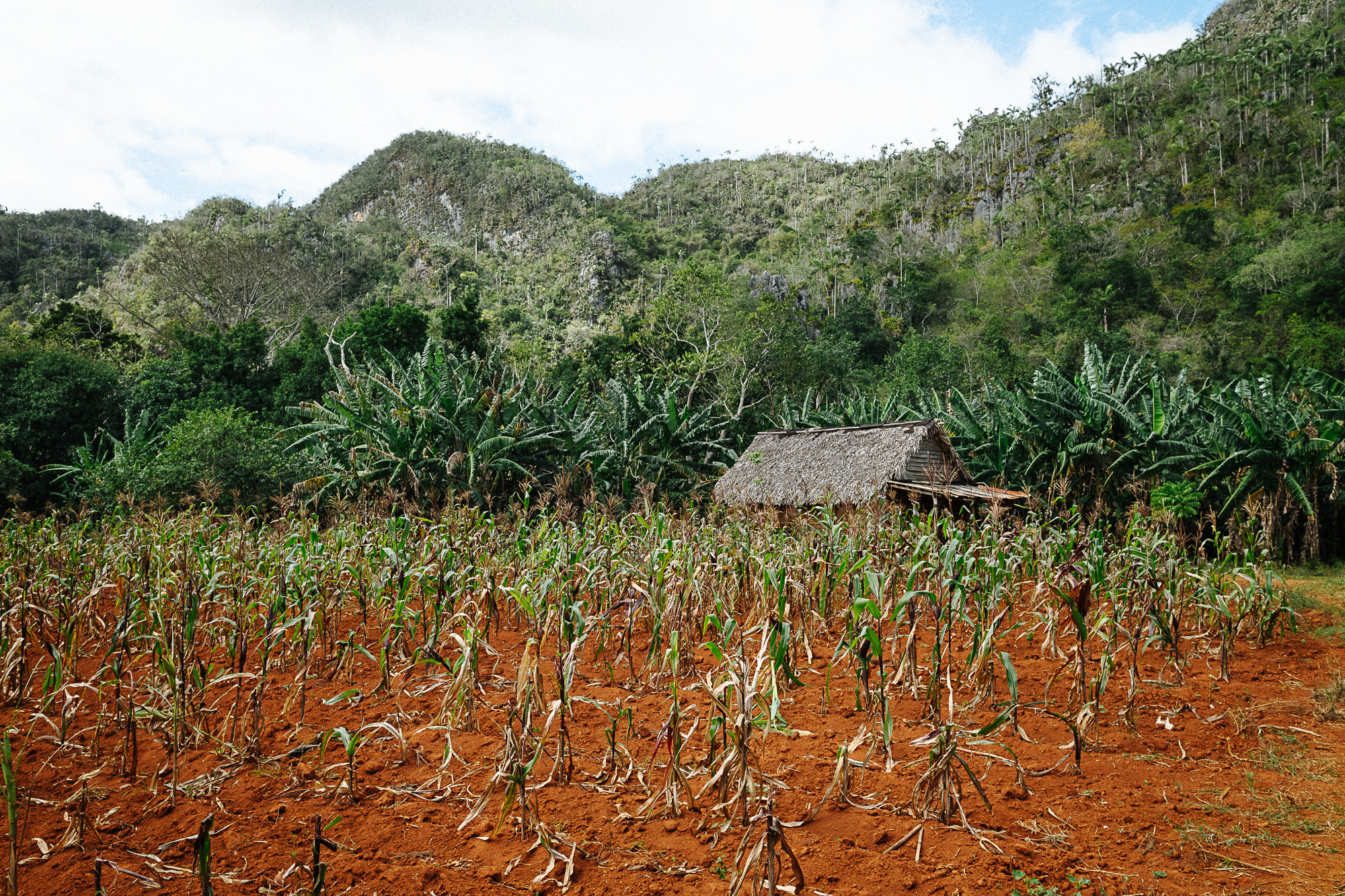 fat-creative-travel-visit-vinales-cuba-hiking-tobacco-farm.jpg