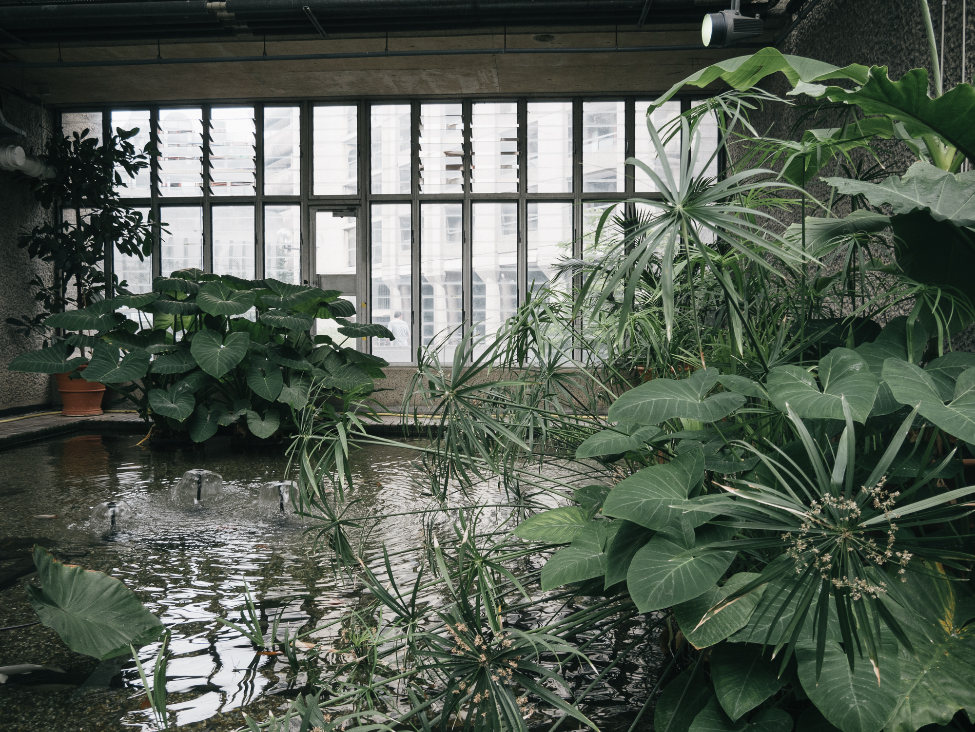 Conservatory is home for over 2,000 species of tropical plants and trees