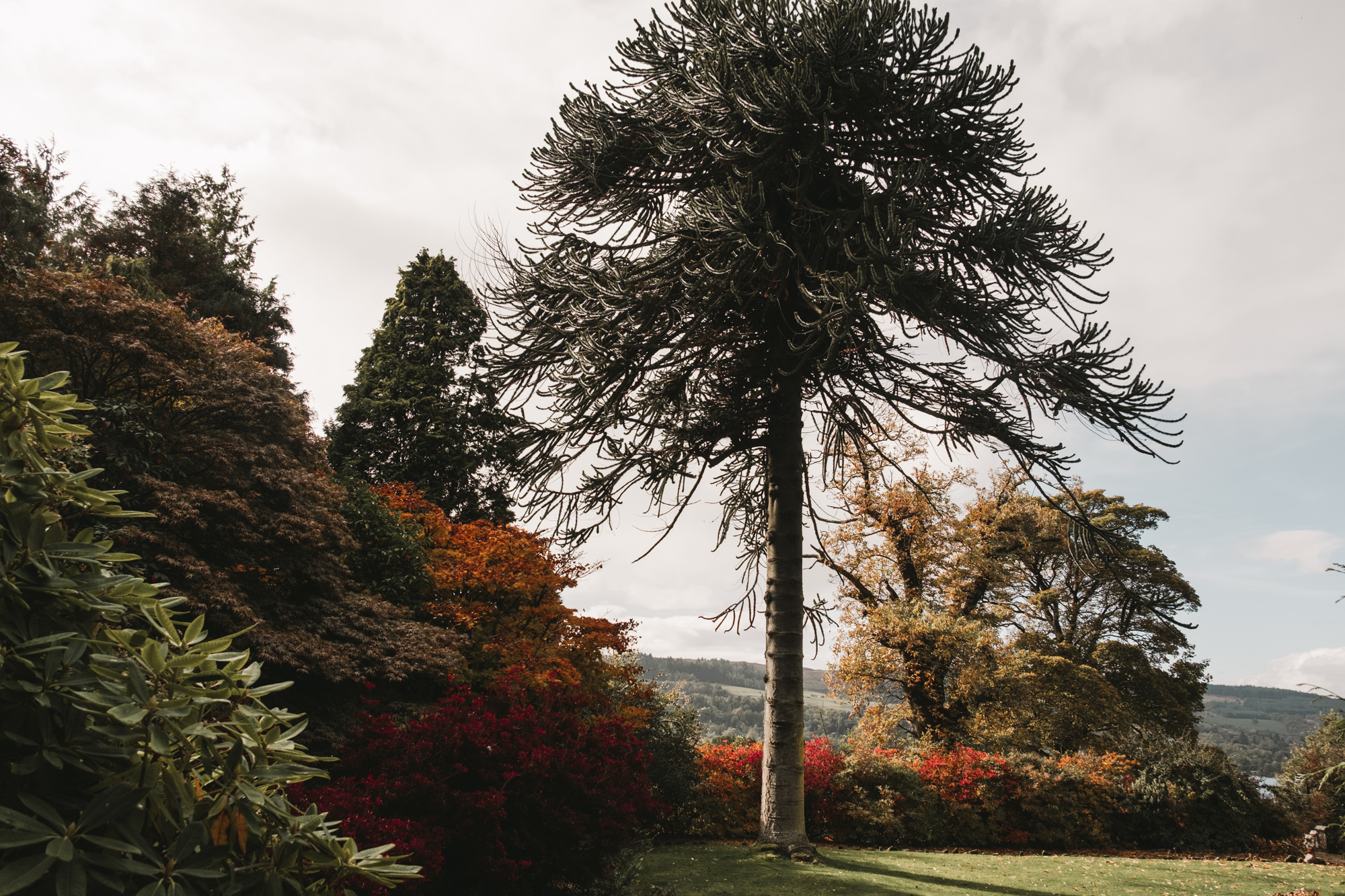 Balloch-castle-country-park-scotland-17.jpg