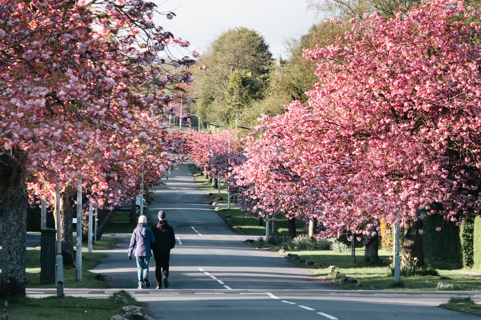 Helensburgh streets in Spring