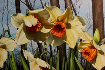 noaps-dibenedetto_dance-of-the-daffodils-24x36.jpg
