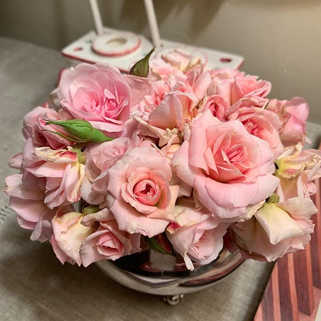 Cecile Brunner roses #willamettelivingmagazine
