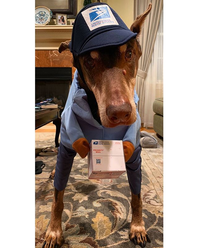 Find a cuter Postman — we dare you 🎃  #packagingdesign #halloween #happyhalloween #doberman #usps #delivery #packaging #thursday
