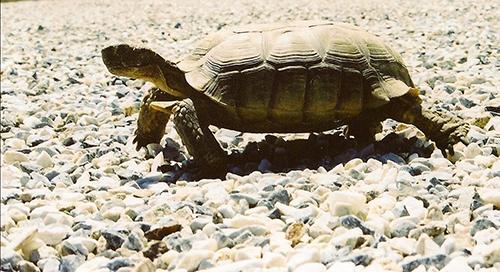 tortoise_500.jpg