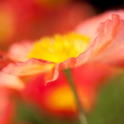 Red_Flower_2623.jpg