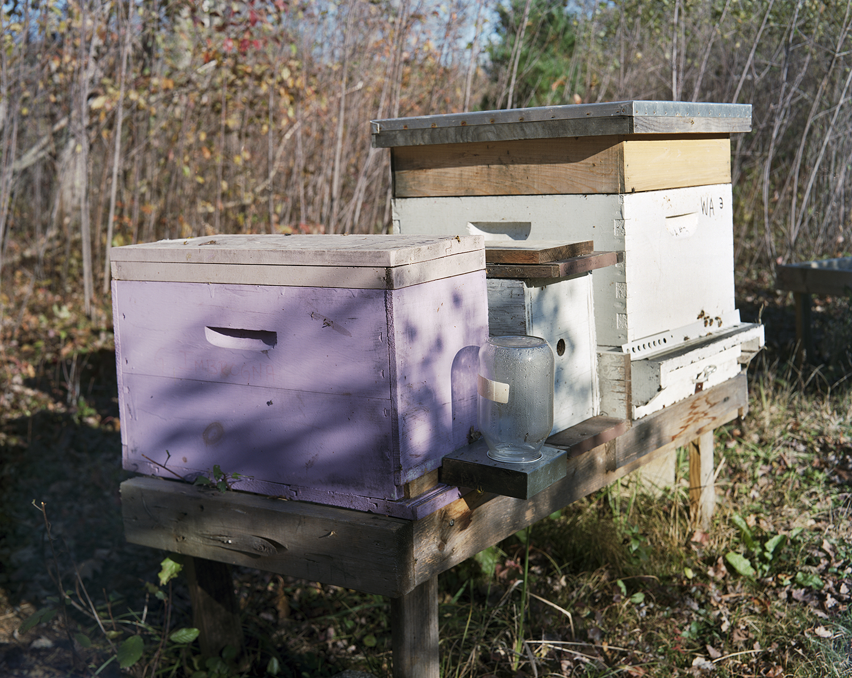 Renee Ricciardi Non Nobis Honeybees 1.jpg