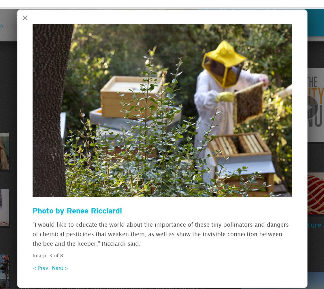 Renee Ricciardi Press Massart. Boston Art Bees 3.jpg