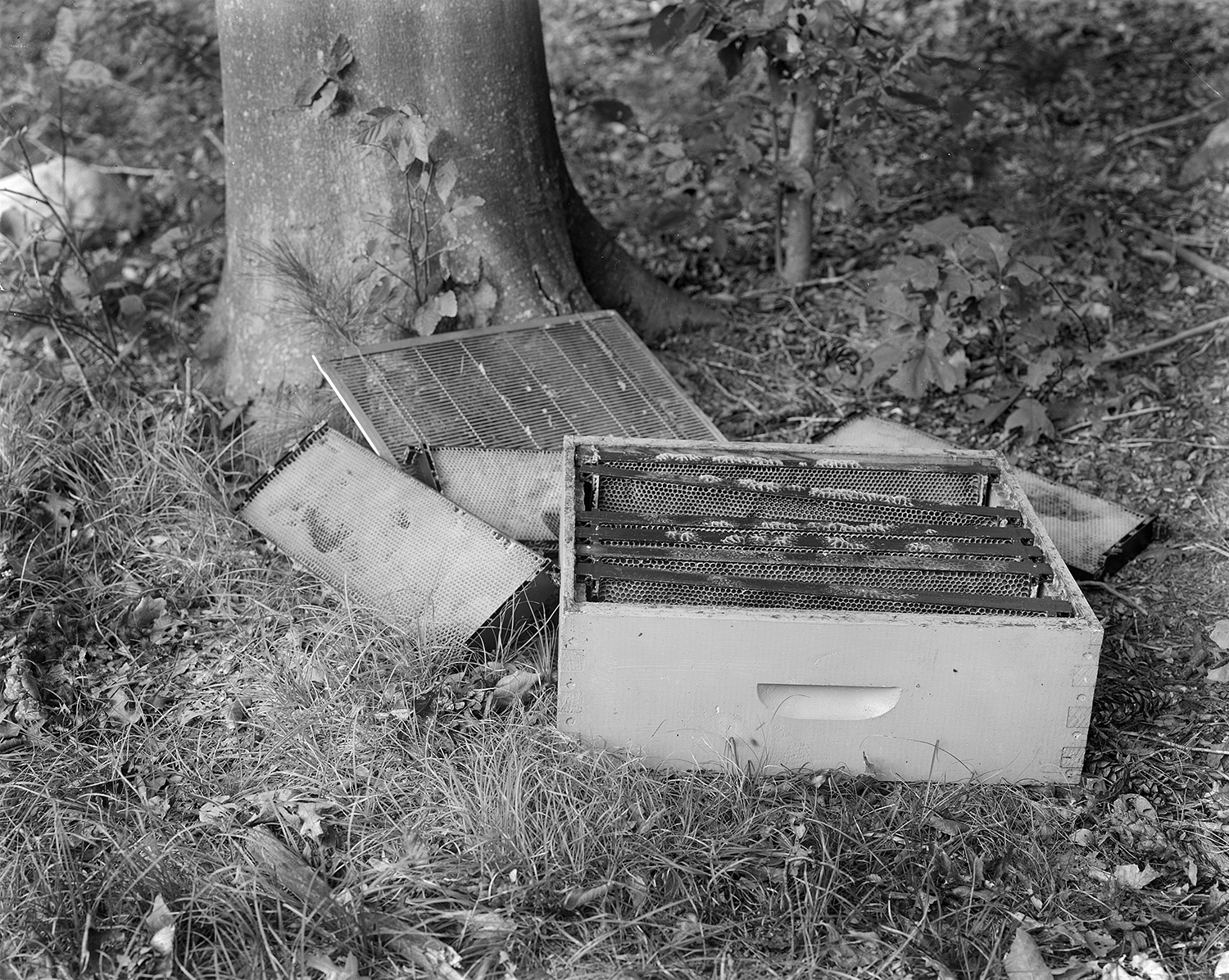 Standard Langstroth Style Beehives  8x10 Large Format Silver Gelatin Contact Print. 2011.