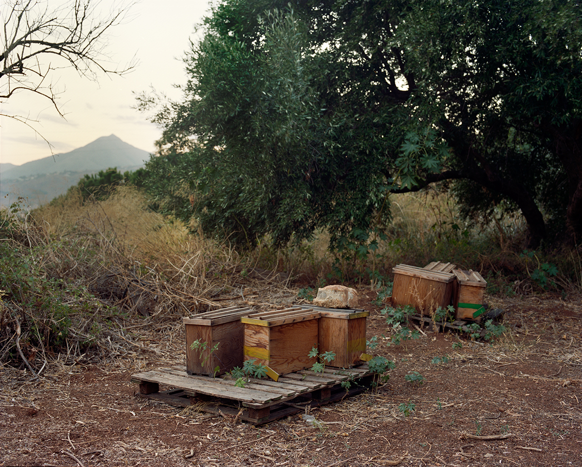 Apiary in Siracusa, Italy. 2014.