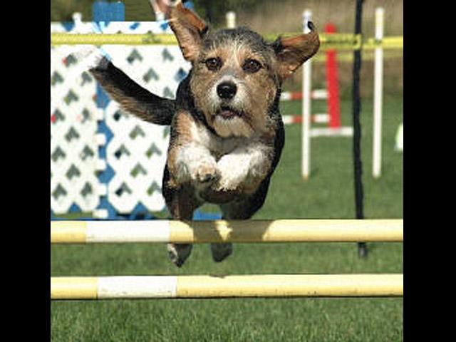 6 October 2001 jump.JPG