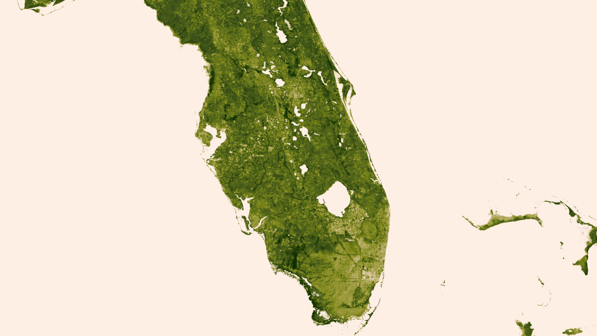 The Florida everglades in their green glory.