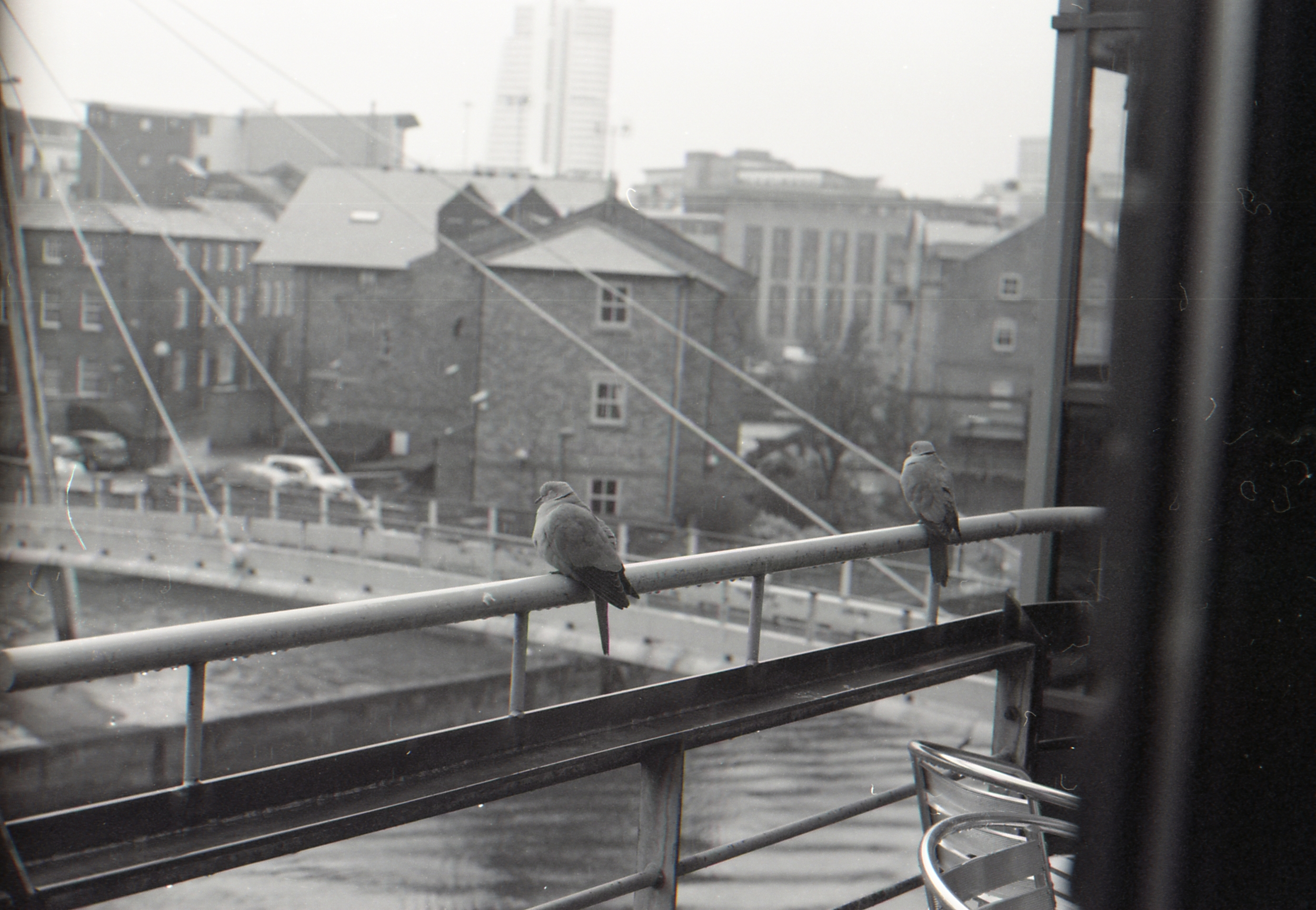 Day 103 - I sit right near the balcony at work (which is so awesome I must say and very good for my sunshine intake/serotonin levels) and I've never seen a collared dove on the rail let alone two! If you look closely you can just about see the rain and how wet it was that day too!