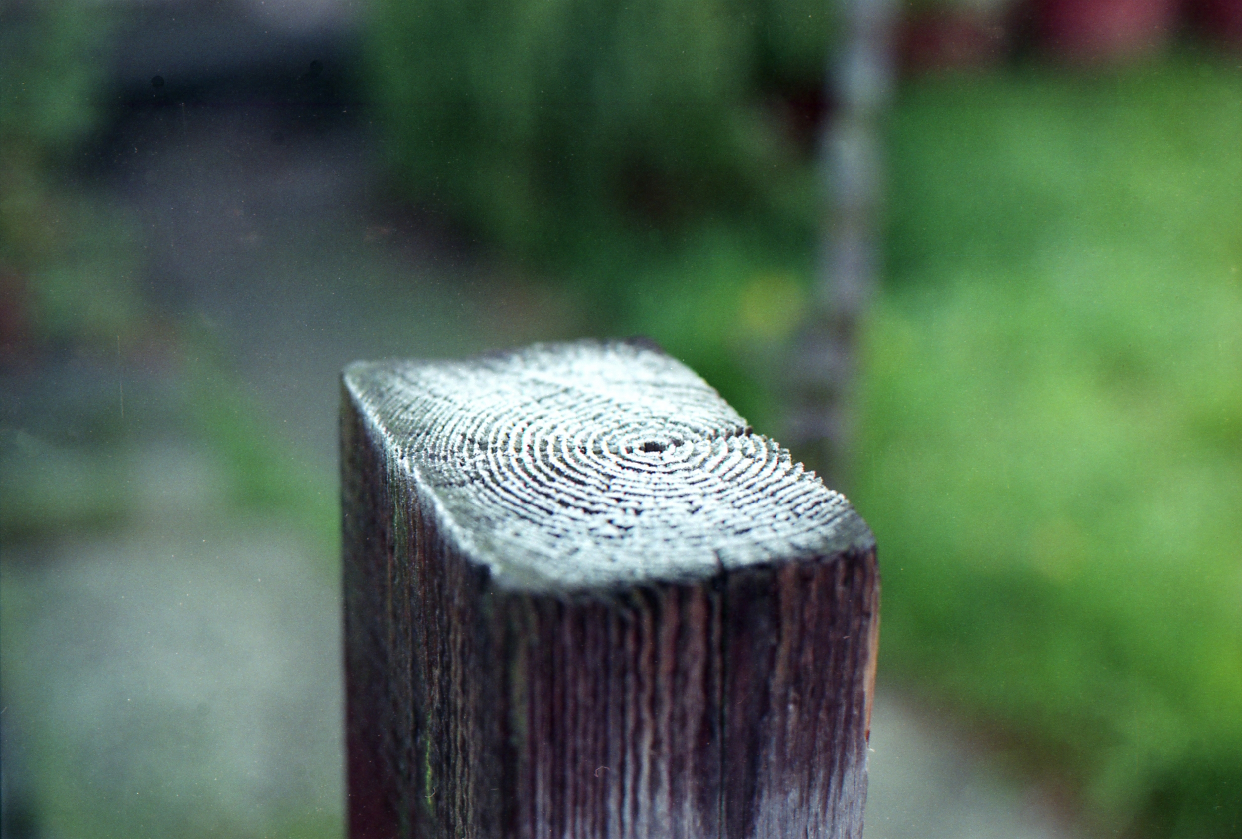 Day 119 - Frost on the fence post