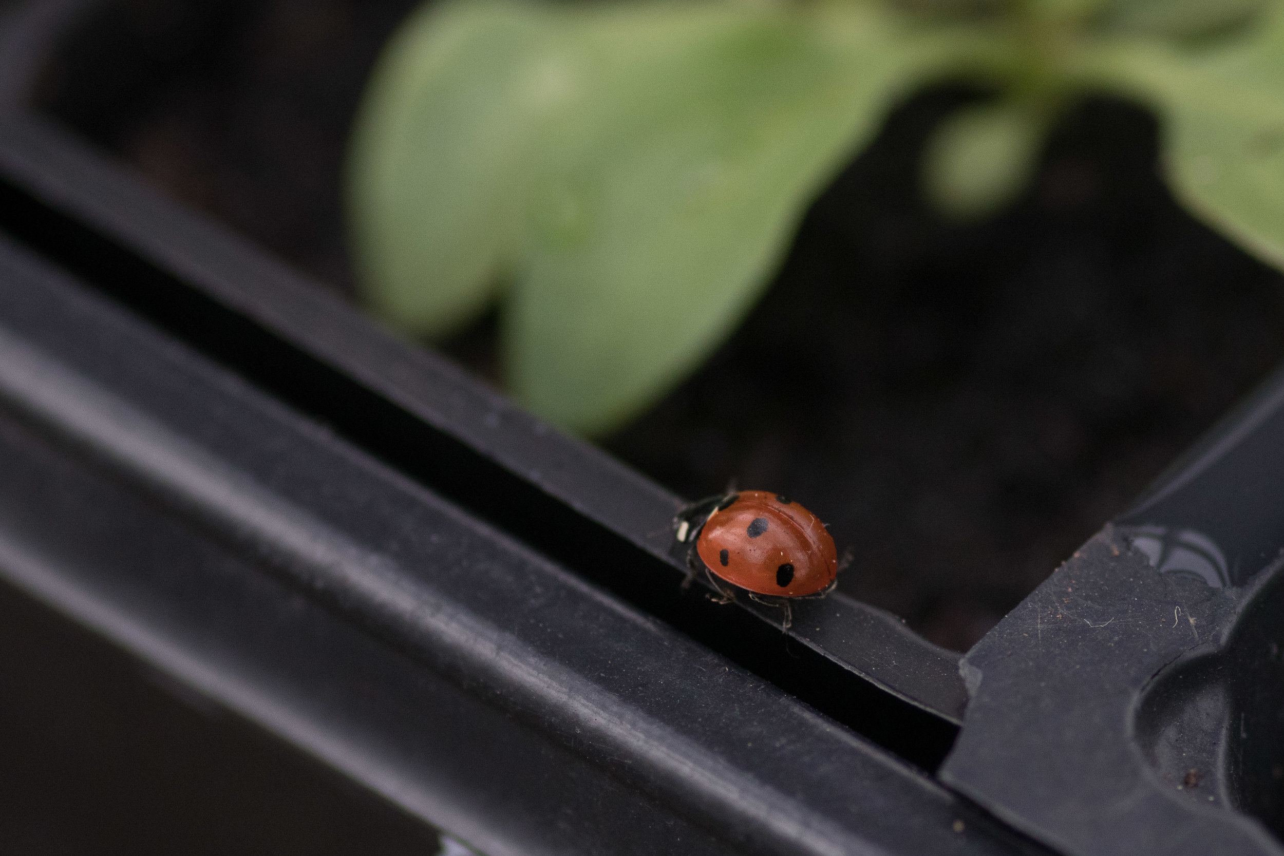 I hope you're heading off to eat more aphids…