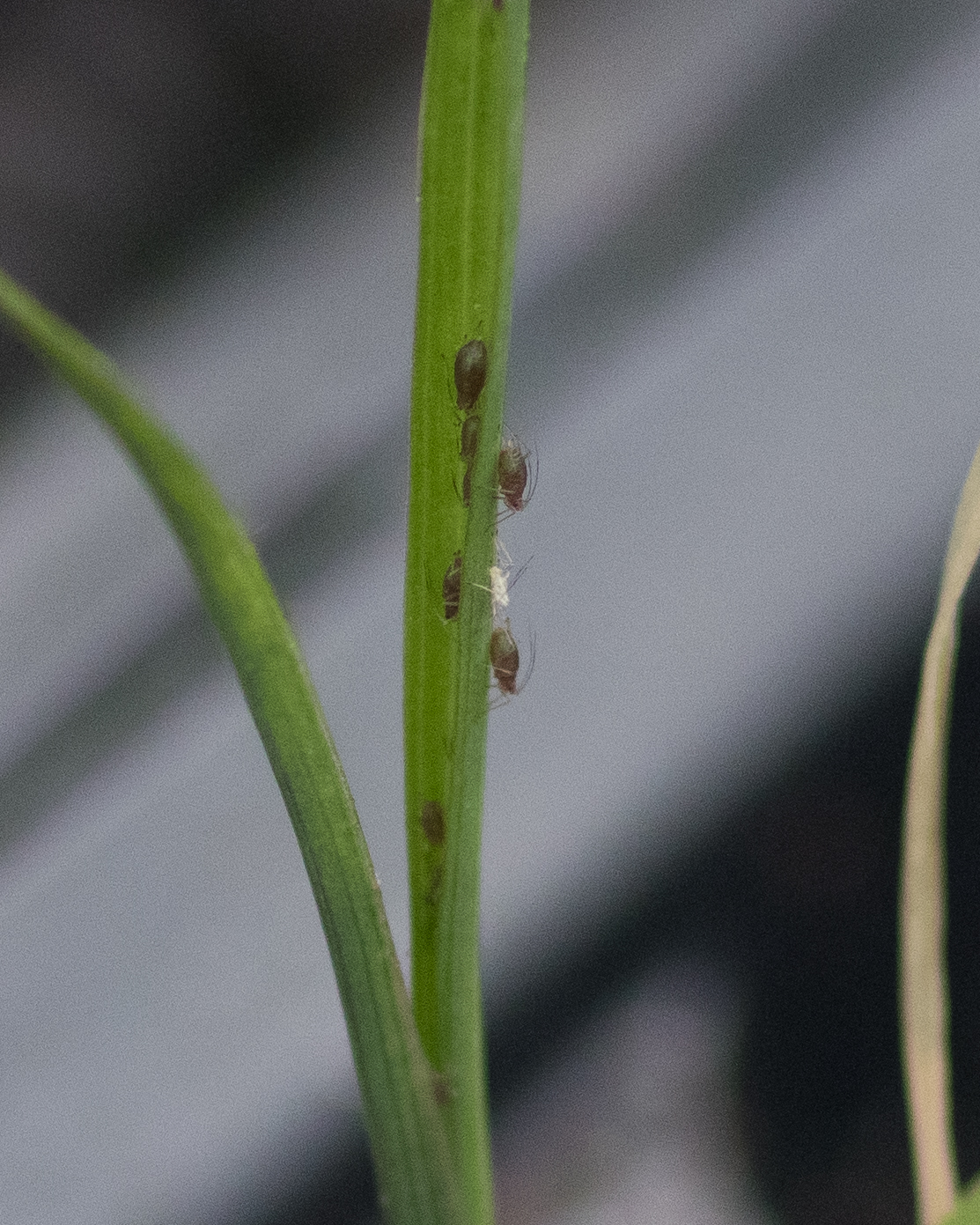 Aphids are gross.