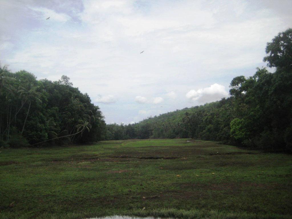 Goa countryside Photo credit: Tanya Viegas