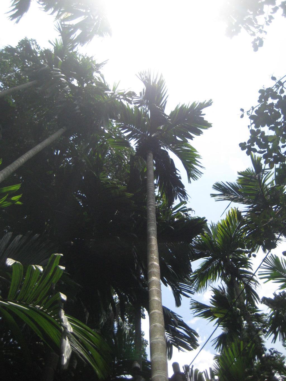 Palm trees Photo credit: Tanya Viegas