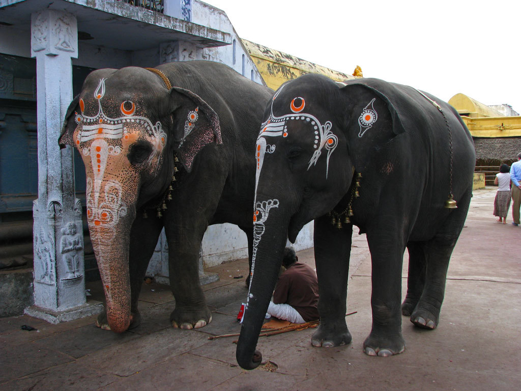 Temple elephants at Kanchipuram Photo credit:  McKay Savage