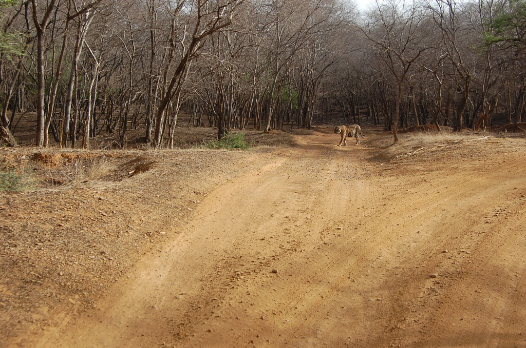 Ranthambore National Park   Photo credit:   Bonnie Ann Cain-Wood