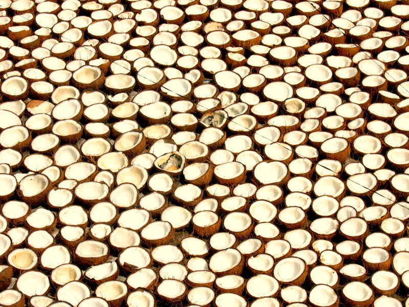 Coconuts are a very important part of Kerala cuisine Photo credit:  Dan Iserman