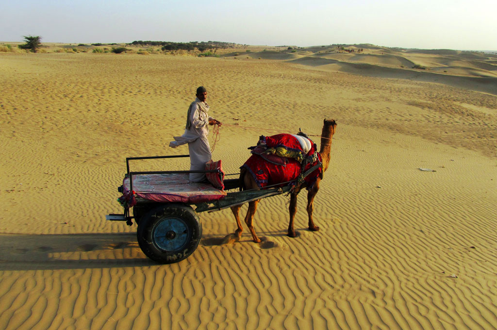 camel-safari.jpg
