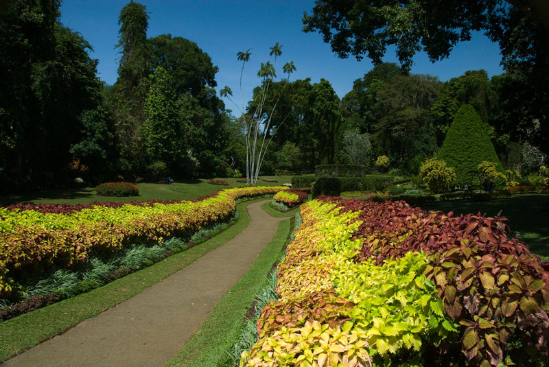 Royal Botanical Garden, Kandy Photo credit:  Malcolm Browne