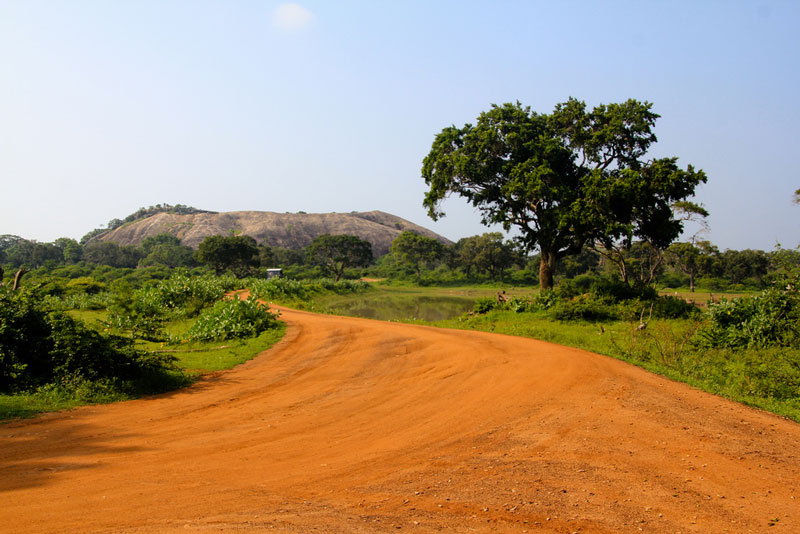 Yala National Park Photo credit:  Patty Ho
