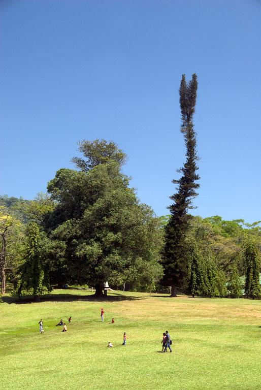 Royal Botanical Garden, Kandy Photo credit:  Malcolm Browne