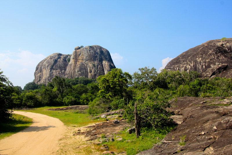 Yala National Park Photo credit:  Patty Ho