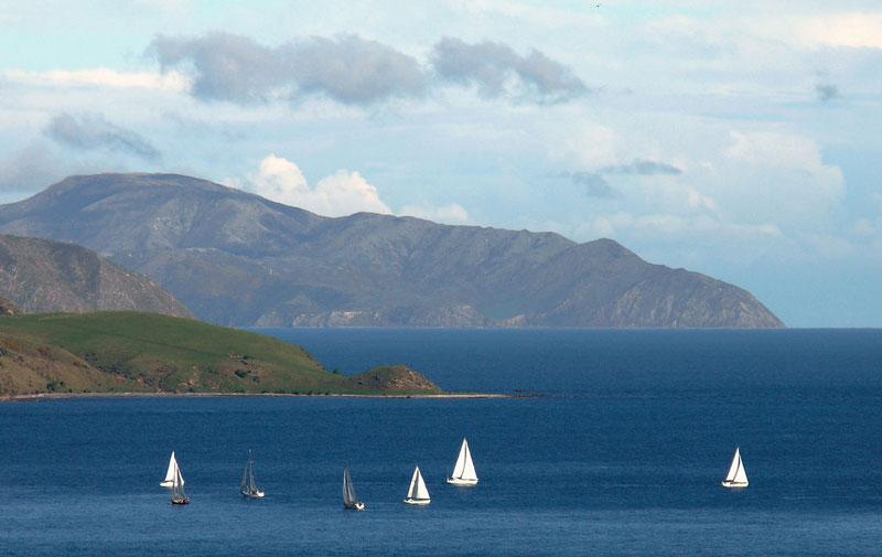 Wellington Photo credit:  Phillip Capper