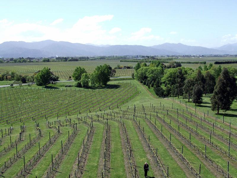 Vineyard at Marlborough Photo credit:  Tim Parkinson