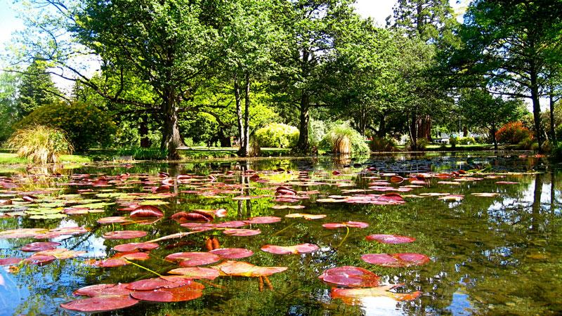 Botanical Gardens, Queenstown Photo credit: Mickaël T.