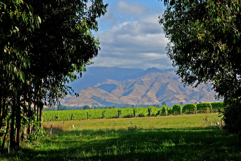 Vineyards at Marlborough Photo credit:  Phillip Capper