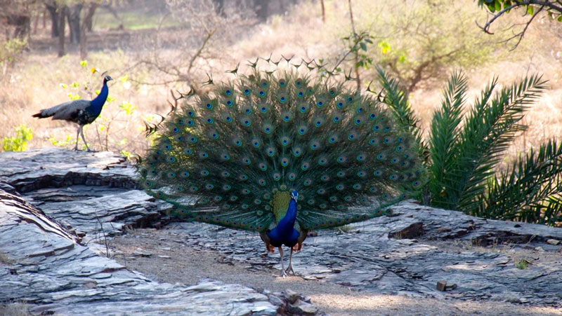 Ranthambore National Park Photo credit:  bjoern