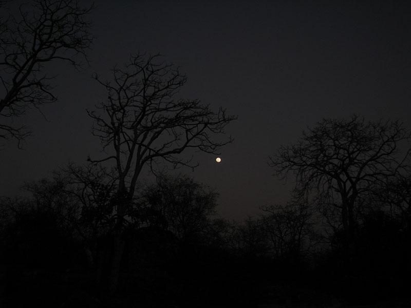 Ranthambore at night Photo credit:  Devesh Jagatram